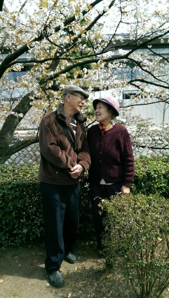 love sakura japan